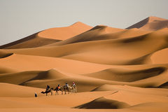 Walk in the desert Royalty Free Stock Images