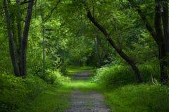 Walk in the park. Stock Photos