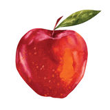 Watercolor apple Stock Images