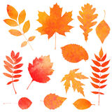 Watercolor collection of beautiful orange autumn leaves Stock Images