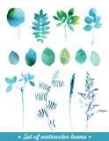 Watercolor leaves and grass. Stock Image