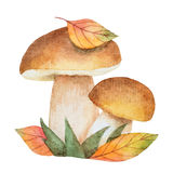 Watercolor mushrooms with autumn leaves Stock Photography