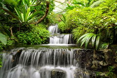 Waterfall in the Rain Forest Stock Photo