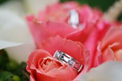 Wedding rings on the flowers Royalty Free Stock Photos