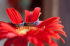 Wedding Rings Nestled in red Gerber Daisies. Wedding rings on the flowers Stock Photo