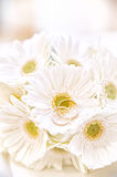 Wedding Rings on white Flowers Stock Images