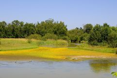 Wetland of a migratory bird sanctuary, with little yellow flowers on the sand Royalty Free Stock Photos
