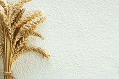 Wheat flour and wheat spike Stock Image