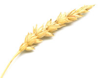 Wheat spike Stock Photography