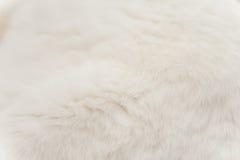 White Cat Fur Royalty Free Stock Photo