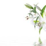 White lilium flower - SPA design background Royalty Free Stock Images