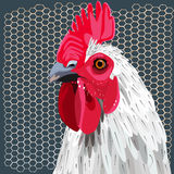 White rooster and fence Royalty Free Stock Photo