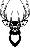Whitetail Deer Head Royalty Free Stock Photography