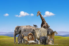 Wild animals group Royalty Free Stock Photo