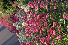Wild border plants Royalty Free Stock Image