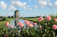Windmill and flowers in Holland Royalty Free Stock Photos