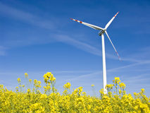 Windmill in yellow field Royalty Free Stock Image