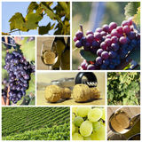 Wine and vineyard collage Royalty Free Stock Photography