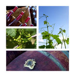 Wine and viticulture Royalty Free Stock Images