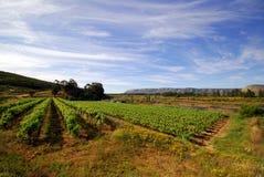 Wine yard Royalty Free Stock Photography