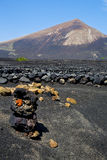Winery lanzarote    cultivation viticulture Royalty Free Stock Images