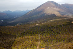 Winery lanzarote spain la crops  cultivation viticulture Royalty Free Stock Image