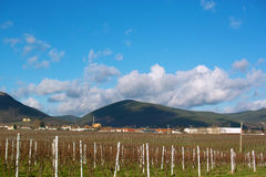 Wineyards in autumn Royalty Free Stock Photos