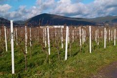 Wineyards in de herfst Royalty-vrije Stock Afbeelding