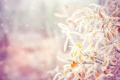 Winter Background with snow branches tree leaves Stock Photography