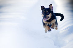 Winter dog run Stock Photography