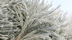 Winter frost Stock Photos