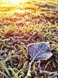 Winter hoar frost Stock Image