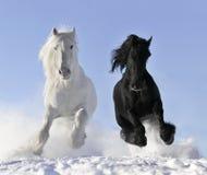 Wit en zwart paard Royalty-vrije Stock Afbeelding