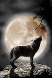 Wolf die aan de maan huilt Royalty-vrije Stock Foto