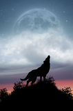 Wolf Howling at Full Moon Stock Photography