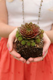 Woman's Hands Holding Small Plant Stock Photography