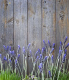 Wood Lavender Flowers Background Stock Images