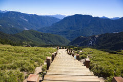 Wood stairs in the hehuanshan forest Recreation area Royalty Free Stock Photos