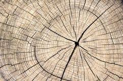 Wood stam för textursnittträd Arkivbilder