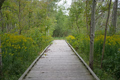 Wooden Walkway Through Conservation Area Stock Photos