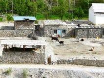 Yard Tajik farmer Royalty Free Stock Images