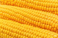 Yellow corn Royalty Free Stock Images