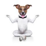 Yoga dog Royalty Free Stock Photos