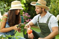 Young couple gardening Royalty Free Stock Image