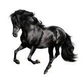 Zwarte horserunsgalop die op wit wordt geïsoleerd Stock Foto's